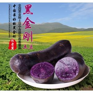 青海黑土豆 10斤礼盒 黑金刚土豆 高原品质