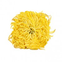金丝皇菊 20朵礼盒装 一杯一朵五星生态大黄菊 三朵花