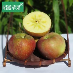 云南冰糖心野生丑苹果80-85红富士新鲜水果12斤批发包邮