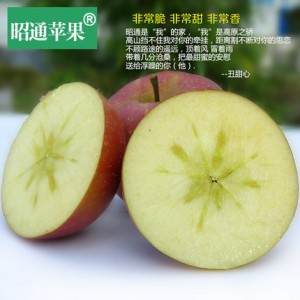 云南昭通苹果云南冰糖心野生丑苹果75-80红富士新鲜水果10斤