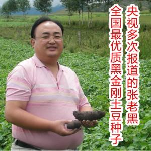 黑土豆种子 黑金刚土豆种子 紫色土豆种子